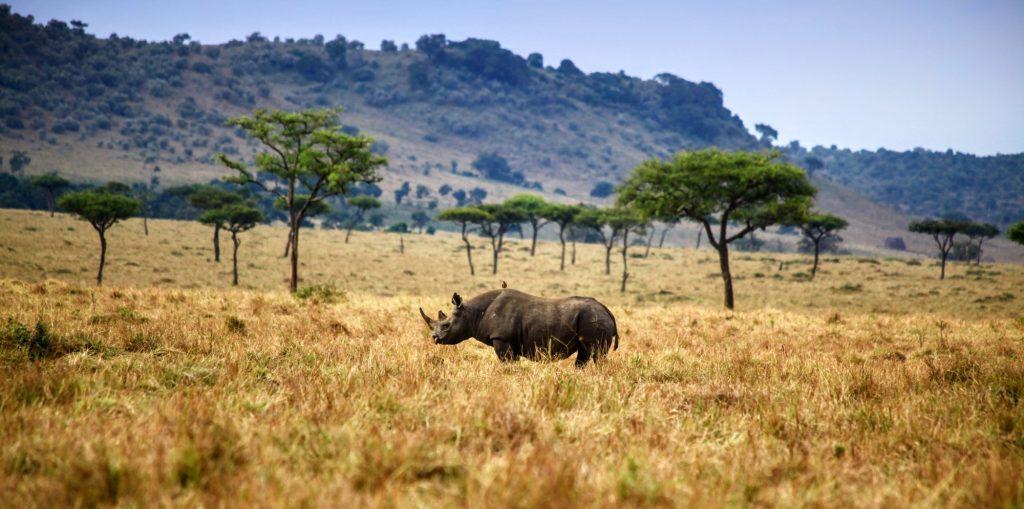 African Safari Tours & Travel Trips